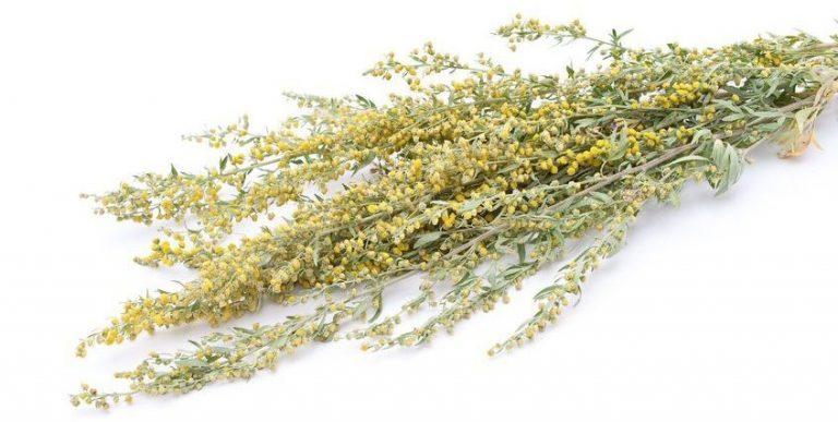 Найдено растение убивающее рак за 16 часов на 98%
