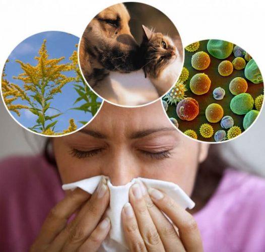 Как отличить аллергию от простуды, различия в симптомах